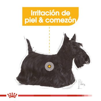 Royal Canin Small Sensitive Skin Care/RCHN Mini Dermaconfort 1.36 kg